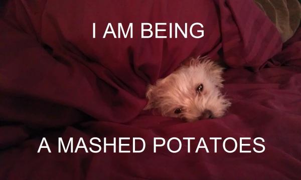 potato28