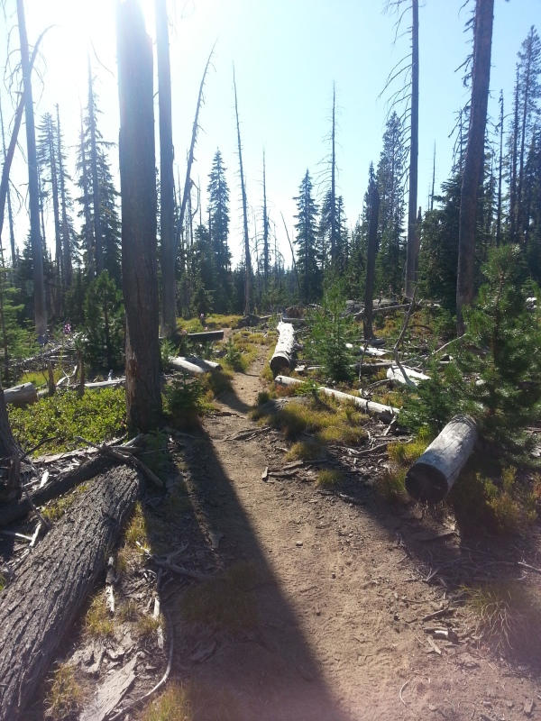 pacific crest trail 3181