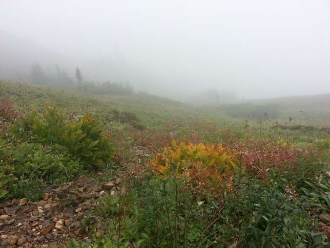 pacific crest trail 4032