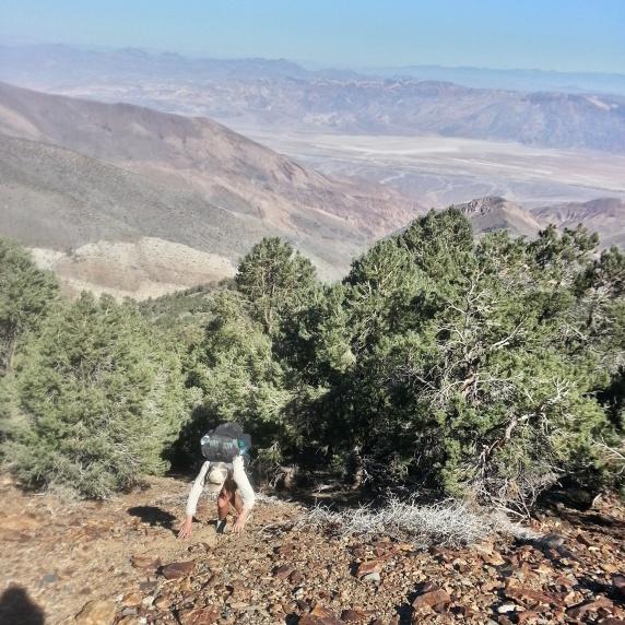 Chance on the climb up to Telescope Ridge