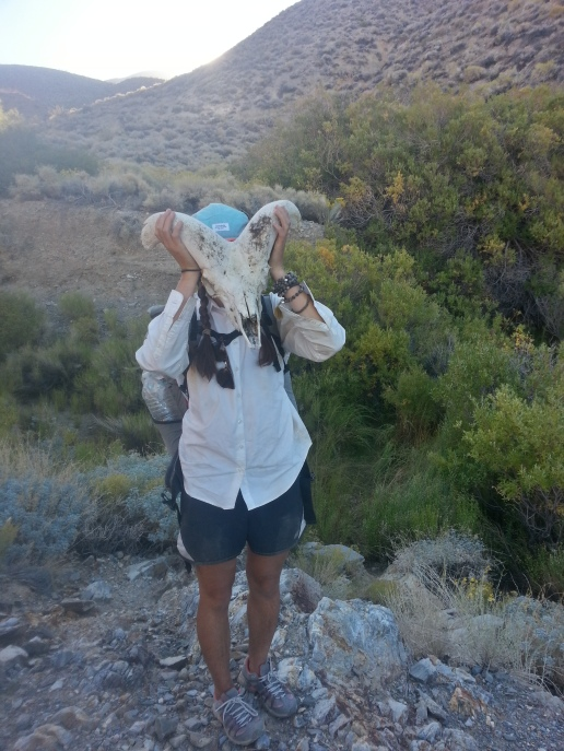 Jess finds a bighorn sheep skull in Tuber Canyon
