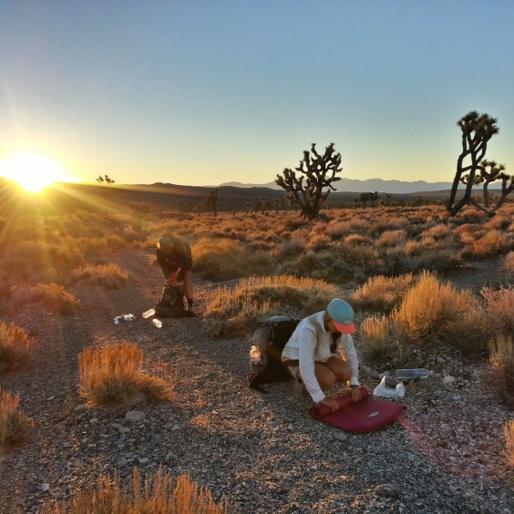 Morning amongst the Joshua trees.